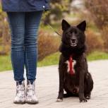Молодой пёс БАСТЕР – компаньон и охранник!, Новосибирск