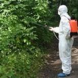 Уничтожение клещей на участке безопасно для детей и животных, Новосибирск