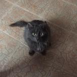 Ищем хозяина для милого котика!, Новосибирск