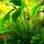Аквариумные растения, Новосибирск