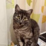 Ласковый котик Тимоша ♥, Новосибирск