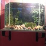 Продам аквариум 60 л, Новосибирск