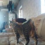 Отдам котят в хорошие руки, Новосибирск