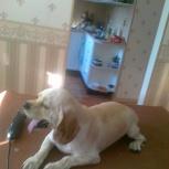 животные, собаки, груминг, Новосибирск