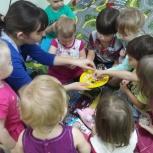 Развивающие занятия для малышей от 1 года, Новосибирск