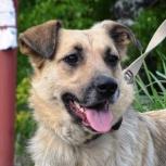 Молодая красивая собака в добрые руки!, Новосибирск