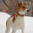 Отдам в добрые руки собаку Барби, Новосибирск