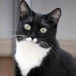 Кошка мурзилка, Новосибирск