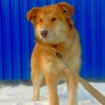 Молодая красавица-собака станет отличной охранницей частного дома!, Новосибирск