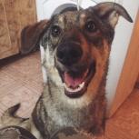 Замечательная собачка Боня! Добрая и солнечная девочка!, Новосибирск