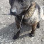 Собаки Максик и Тоша ищут добрых хозяев, Новосибирск