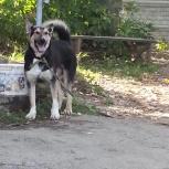 Потерялся пес Чижик с.Быково летом 2016.Сообщите где он, что случилось, Новосибирск