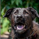 Нора - красивая, молодая собака, Новосибирск