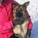 Ищет дом молодая девочка Вега – собака с большой душой!, Новосибирск
