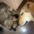 Две очаровательные малышки щенка, Новосибирск