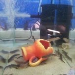 красивые аквариумные рыбки, Новосибирск