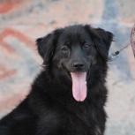 Собачка Кира – молодая, небольшого размера улыбчивая красавица!, Новосибирск