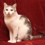 Молоденький красивый кот, нежный и трепетный мальчик!, Новосибирск
