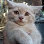 Отдам в хорошие руки котика за символическую плату, Новосибирск
