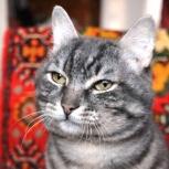 Кот Василий мечтает обрести дом, Новосибирск