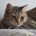 Длиннолапая полосатая красавица-кошка Мурка ищет дом!, Новосибирск