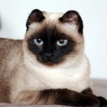 Кошка Севара!, Новосибирск