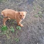 Кто забрал рыжую собачку у магазина на ул.Новой за тэц5 откликнитесь, Новосибирск