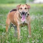 Герман, активный и позитивный пес!, Новосибирск
