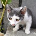 Симпатичный котенок ♥ в самые добрые руки, Новосибирск