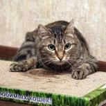 Котенок Сеня, Новосибирск