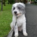 Трогательный, скромный и обаятельный пёс по имени Макс ищет хозяев, Новосибирск