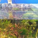 Аквариумные растения живые водоросли много, Новосибирск