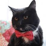Импозантный парень, кот Консерва мечтает улучшить жилищные условия!, Новосибирск