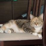 Анфиса – Ваша эксклюзивная кошка, Новосибирск