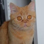 Немолодая кошечка-метис с потрясающими глазами Рина, Новосибирск