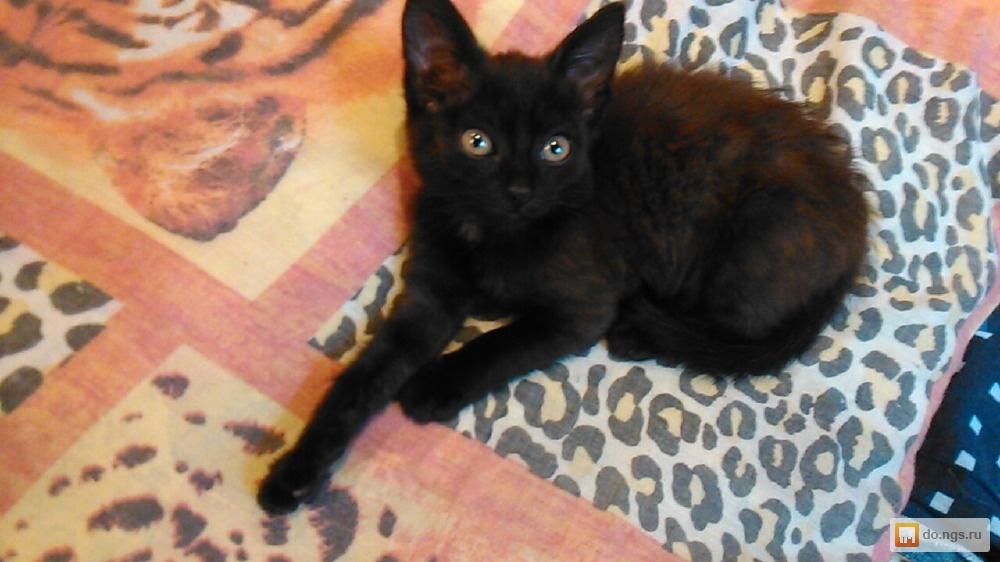 котята новосибирск с фото