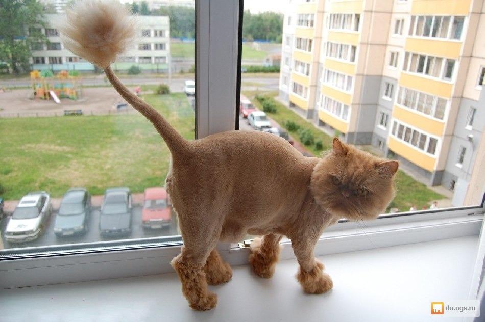 стрижки для кошки фото