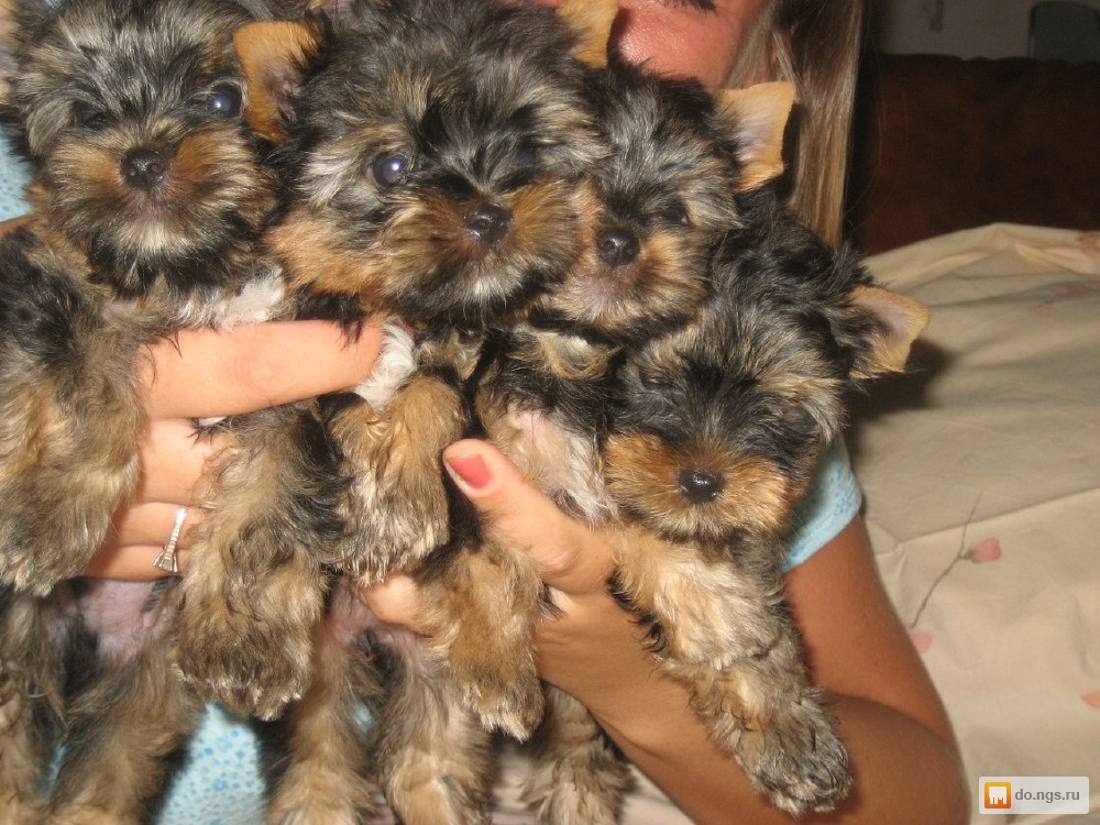 Портал сайт о кошках и собаках помощь профессионалов в