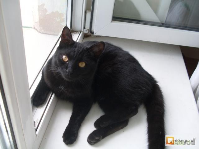 видео про черно белого кота