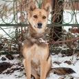 Обаятельный пес Филя в добрые руки, Новосибирск