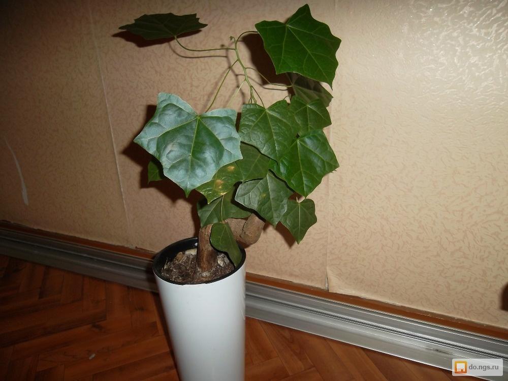 Редкие комнатные растения фото