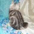 Просто классный кот, Новосибирск