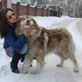 Отдам собаку кавказскую овчарку в частный дом, Новосибирск