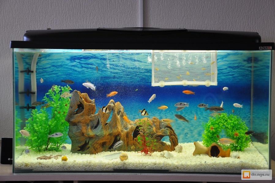 Как красиво оформить аквариум на 100 литров своими руками 45
