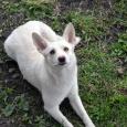 Ласковая девочка Белочка (собака), Новосибирск