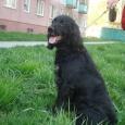 Собака Рич, Новосибирск