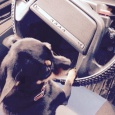 Тойчик щенок, Новосибирск