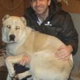 В добрые руки собака даром, Новосибирск