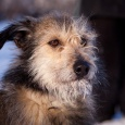 Забавная собака Иришка, Новосибирск