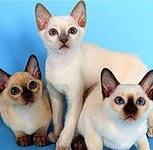 Стерилизация кошек на дому, Новосибирск